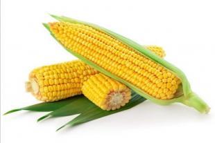 如福农牧有限公司紧急求购大豆2000吨