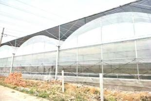 青州玻璃连栋温室厂家直销
