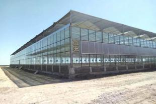 青州玻璃连栋温室厂家