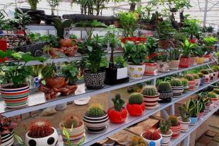 潍坊花卉温室大棚