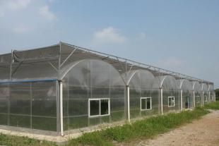 山东pc板温室大棚建造价格