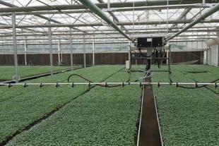 山东玻智能璃温室生产