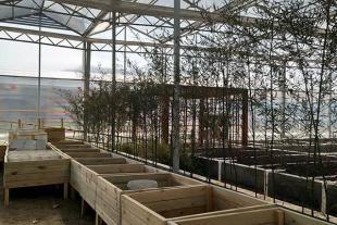 潍坊智能日光温室生产