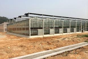 山东玻璃温室建设厂家